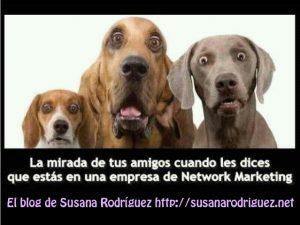perros MLM SRC